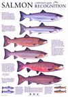 Atlantic Salmon - Recognition